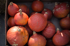 Appetizing red pumpkins Royalty Free Stock Photo