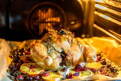Appetizing Roast chicken turkey with Orange Slices Cranberries and Herbs in the oven Stock Photos