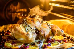 Appetizing Roast chicken turkey with Orange Slices Cranberries and Herbs in the oven Stock Photography