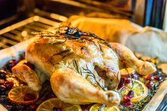 Appetizing Roast chicken turkey with Orange Slices Cranberries and Herbs in the oven Stock Image