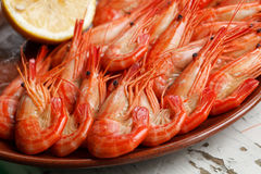 Appetizing shrimp platter. Clsoe up view of an appetizing cooked shrimp or prawn platter neatly arranged with curled tails facing the camera Royalty Free Stock Photography
