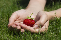 Appetizing strawberry in hands Royalty Free Stock Image