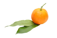 Appetizing tangerine with green leafes.Isolated. Royalty Free Stock Photography