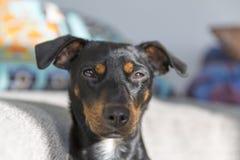 Appisolarsi sveglio del cucciolo fotografia stock libera da diritti