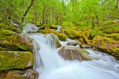 Applådera vattenfall i en skogflod royaltyfria foton