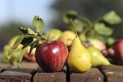 Apple和梨 免版税库存照片