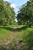 Apple庭院 图库摄影