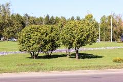 Apple-árbol en el cuadrado de ciudad Foto de archivo libre de regalías