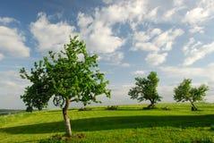 Apple-árvores na mola Foto de Stock Royalty Free