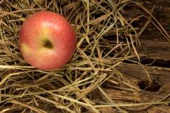 Apple άχυρο Στο ξύλο Στοκ Εικόνες