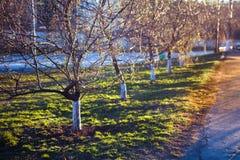 Apple-δέντρα Στοκ φωτογραφία με δικαίωμα ελεύθερης χρήσης