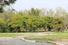 Apple-δέντρο σε έναν κήπο Στοκ φωτογραφία με δικαίωμα ελεύθερης χρήσης