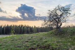 Apple-δέντρο στον τομέα του ξύλου άνοιξη Στοκ εικόνες με δικαίωμα ελεύθερης χρήσης