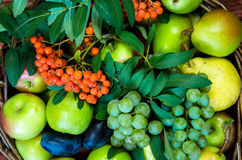 Apple, αχλάδι, δαμάσκηνο, rowanberry και σταφύλι Στοκ Εικόνες