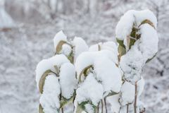 Apple-δέντρο κάτω από το χιόνι Φύλλα Apple-δέντρων στο χιόνι Στοκ φωτογραφία με δικαίωμα ελεύθερης χρήσης