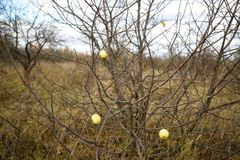 Apple-δέντρο φθινοπώρου Στοκ Εικόνα