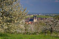 Apple και άνθος δέντρων κερασιών κοντά σε Ockstadt Στοκ φωτογραφίες με δικαίωμα ελεύθερης χρήσης