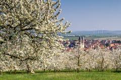 Apple και άνθος δέντρων κερασιών κοντά σε Ockstadt Στοκ Εικόνες