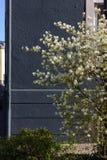 Apple και άνθος κερασιών Στοκ Φωτογραφία