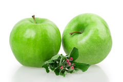 Apple και άνθος μήλων Στοκ Φωτογραφία