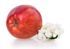 Apple και άνθος μήλων Στοκ εικόνα με δικαίωμα ελεύθερης χρήσης