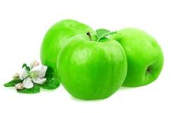 Apple και άνθος μήλων Στοκ φωτογραφίες με δικαίωμα ελεύθερης χρήσης