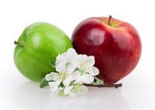 Apple και άνθος μήλων Στοκ φωτογραφία με δικαίωμα ελεύθερης χρήσης
