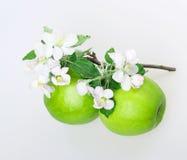 Apple και άνθος μήλων Στοκ Εικόνες