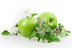 Apple και άνθος μήλων Στοκ εικόνες με δικαίωμα ελεύθερης χρήσης