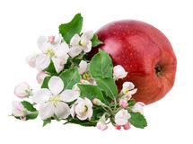 Apple και άνθος μήλων Στοκ Εικόνα