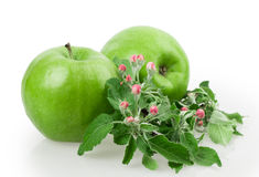 Apple και άνθος μήλων Στοκ Φωτογραφίες