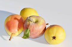 Apple και αχλάδια Στοκ εικόνες με δικαίωμα ελεύθερης χρήσης