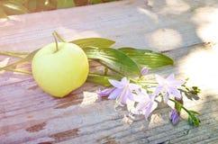 Apple και κουδούνι λουλουδιών Στοκ Φωτογραφίες
