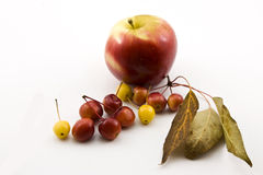 Apple και μικρά μήλα Στοκ Εικόνα