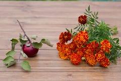 Apple και λουλούδια Στοκ Εικόνες
