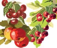 Apple και φρούτα Watercolor κερασιών Στοκ φωτογραφίες με δικαίωμα ελεύθερης χρήσης