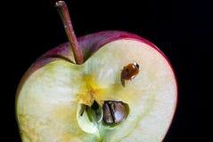 Apple και ladybug Στοκ Φωτογραφία