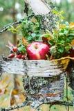 Apple και rosehip ζωή φθινοπώρου ακόμα Στοκ φωτογραφία με δικαίωμα ελεύθερης χρήσης