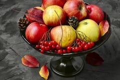 Apple και viburnum Στοκ Εικόνες