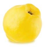 Apple-κυδώνι που απομονώνεται ώριμο Στοκ Εικόνες