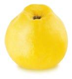 Apple-κυδώνι που απομονώνεται ώριμο Στοκ Φωτογραφία