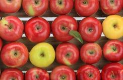 Apple, κόκκινο, κίτρινο Στοκ Εικόνες