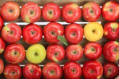 Apple, κόκκινο, κίτρινο Στοκ Φωτογραφίες