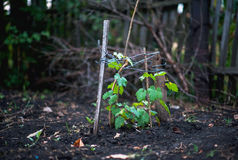 Apple, μήλα, δαμάσκηνα, ντομάτες, σταφύλια, φράουλες Πώς να αυξηθεί τις εγκαταστάσεις κήπων το καλοκαίρι Στοκ Εικόνα