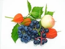 Apple, μαύρα σταφύλια συμφωνίας και λουλούδι physalis Στοκ φωτογραφία με δικαίωμα ελεύθερης χρήσης