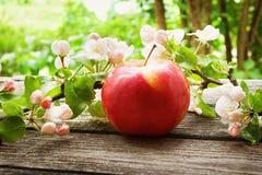 Apple με τα λουλούδια Στοκ εικόνα με δικαίωμα ελεύθερης χρήσης