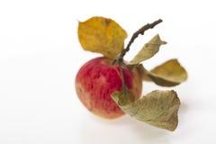 Apple με τα φύλλα σε ένα άσπρο πλαστικό υπόβαθρο Στοκ φωτογραφία με δικαίωμα ελεύθερης χρήσης