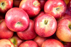 Apple με την ομάδα κόκκινων μήλων Στοκ Φωτογραφίες