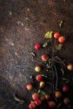 Apple με τους κλαδίσκους και τα φύλλα στην καφετιά κατακόρυφο υποβάθρου πετρών Στοκ Φωτογραφία