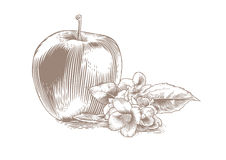 Apple με το λουλούδι και τα φύλλα Στοκ φωτογραφία με δικαίωμα ελεύθερης χρήσης